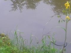Łowisko Leśniczówka
